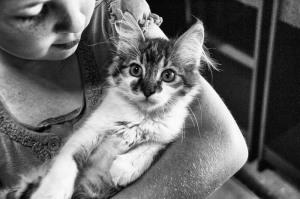 głaskanie kota zmniejsza stres