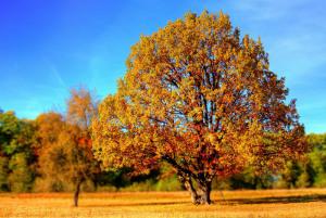 złota jesień życia