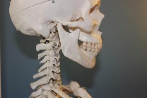 9_szkielet